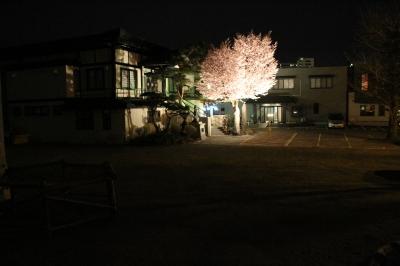遠目から見た桜